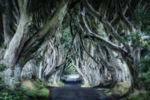 Forestside House dark-hedges-300x200 dark hedges